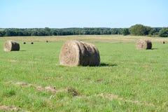 Lato wiejski krajobraz z siano rolkami na zielonej łące Zdjęcie Stock
