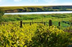 Lato wioski zieleni krajobraz z wzgórzami, jeziorem i winnicami, Obraz Royalty Free