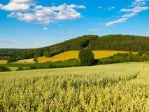 Lato witki zieleni górkowaty krajobrazowy pole, lasy, niebieskie niebo i biel chmury, Fotografia Royalty Free