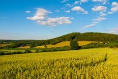 Lato witki zieleni górkowaty krajobrazowy pole, lasy, niebieskie niebo i biel chmury, Zdjęcie Stock