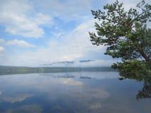 Lato wody krajobraz Niebieskie niebo i jasny woda Jeziorny Pyaozero z odbijać chmurami Wielka świerczyna zginająca nad jeziorem W Zdjęcie Royalty Free