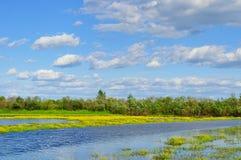 Lato wody krajobraz - wiejski krajobrazowy widok mała rzeka w lato słonecznym dniu Fotografia Stock