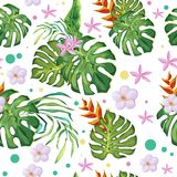 Lato wzór z tropikalnymi liśćmi i zieleń, menchia kwitniemy zdjęcie stock