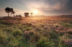 Lato złocisty wschód słońca nad łąką Zdjęcia Royalty Free