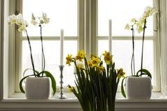 Lato z kwiatami Zdjęcia Stock