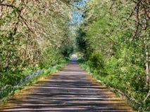 Lato Zbieżna ścieżka zdjęcia stock