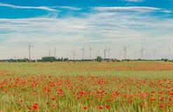 Lato zmierzch przy czerwieni polem maczki, wspaniała natura, Niemcy Zdjęcie Royalty Free