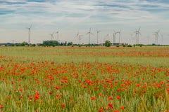 Lato zmierzch przy czerwieni polem maczki, wspaniała natura, Niemcy Fotografia Stock
