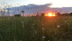Lato zmierzch w polu zbiory wideo
