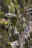 Latrabjarg cliffs - Iceland. Wildlife. Stock Photos