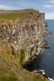 Latrabjarg northwestern tip of Iceland. Royalty Free Stock Photo