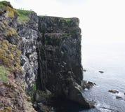 Latrabjarg seabirdklippor Royaltyfri Fotografi