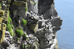 Latrabjarg-Seevogelklippen Lizenzfreies Stockbild