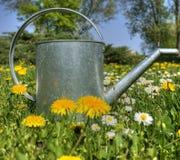 Latta d'innaffiatura del giardino come simbolo della sorgente Fotografia Stock Libera da Diritti