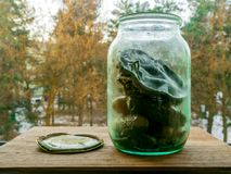 Latta dei cetrioli marinati con la muffa immagini stock libere da diritti