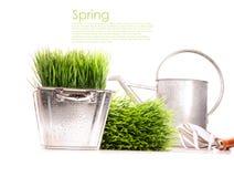 Latta di innaffiatura con erba e gli strumenti di giardino Fotografie Stock