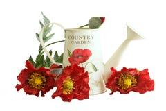 Latta di innaffiatura del paese con i fiori del papavero Fotografia Stock Libera da Diritti
