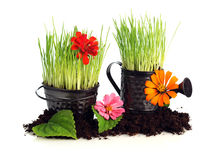 Latta di innaffiatura e flowerpot Fotografia Stock Libera da Diritti