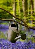 Latta di innaffiatura fra i fiori Immagine Stock