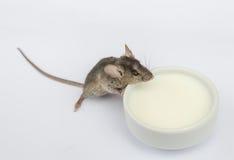 Latte alimentare del topo del bambino Fotografie Stock Libere da Diritti