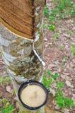 Latte dell'albero di gomma in una ciotola di legno Immagini Stock Libere da Diritti