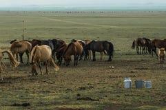 Latte della giumenta nel deserto della Mongolia fotografia stock