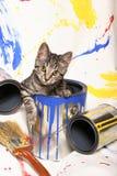 Latte della vernice e del gattino Fotografia Stock Libera da Diritti