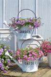 Latte di innaffiatura con i fiori Fotografie Stock