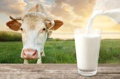 Latte di versamento con la mucca fotografia stock libera da diritti