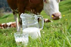 Latte e mucche Fotografie Stock