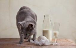 Latte ed uova Immagine Stock