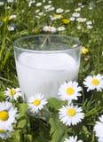 latte fresco Fotografia Stock Libera da Diritti