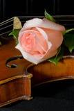 Lattenrose und alte Violine Lizenzfreie Stockfotos