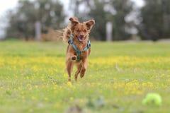 Latteo il cane immagine stock