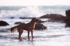 Latteo il mio cane fotografia stock