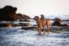 Latteo il mio cane fotografie stock