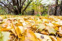 Lattes d'automne photos libres de droits