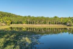 Lattice naturale dell'albero di gomma con lo stagno Fotografie Stock Libere da Diritti