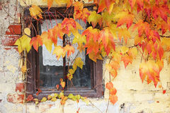 Lattice window framed with vine leaves, rustic country house Royalty Free Stock Image