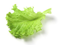 Lattuce leaf Stock Image