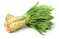 Lattuga dell'asparago fotografia stock libera da diritti