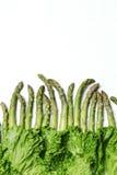 Lattuga di Romaine e dell'asparago nel reticolo Unformed Immagini Stock