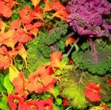 Lattuga e fiori Fotografie Stock