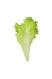Lattuga fresca isolata su priorità bassa bianca Alimento sano Vegeta Fotografie Stock