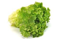 Lattuga frondosa verde Fotografia Stock