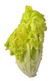 Lattuga isolata Verdure della lattuga dell'insalata isolate sulle sedere bianche Fotografia Stock