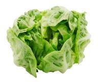 Lattuga romana fresca dell'insalata Fotografia Stock Libera da Diritti