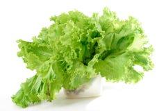 Lattuga verde Immagini Stock