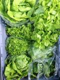 Lattuga verde ad un mercato degli agricoltori Fotografia Stock Libera da Diritti