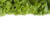 Lattuga verde al confine dell'immagine con lo spazio della copia per testo Fotografia Stock